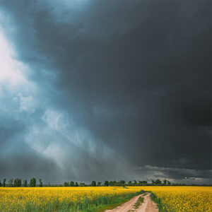 Dramatic Rain Sky With Rain Clouds On Horizon Above Rural Landscape Camola Colza Rapeseed Field. Country Road. Agricultural And Weather Forecast Concept